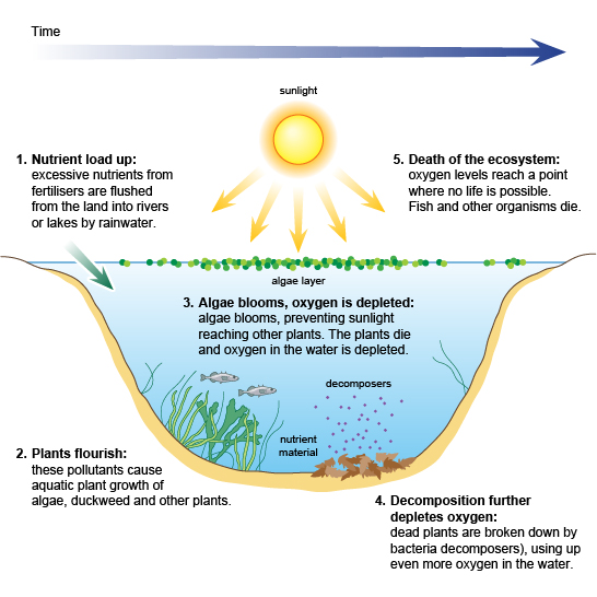 Eutrophication BBC Bitesize
