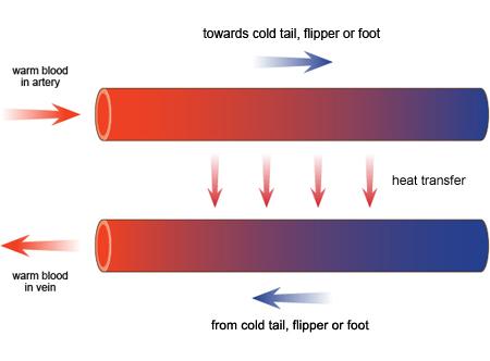 Heat exchangers heat exchangers bbc bitesize heat exchangers bbc bitesize ccuart Image collections