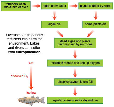phosphorous and eutrophication Eutrophication definition • the nitrogen and phosphorus.