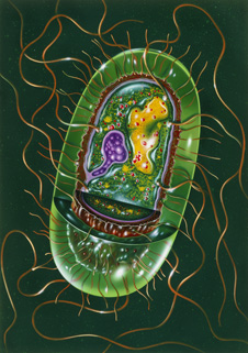 a salmonella bacterium cell