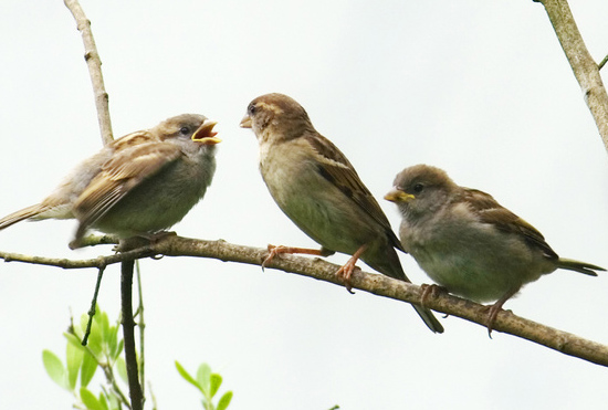 Three birds on a branch