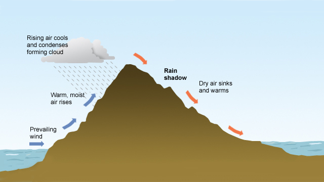 Diagram showing warm, moist air is shown moving from the west and rising as it meets mountains. This forms clouds and causes rain. The air falls and warms on the east side of the mountains resulting in clearer skies and less rain