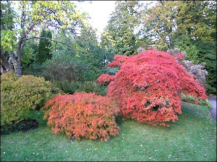 Bath Botanical Gardens (Ian Parker)
