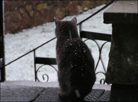Cat looking at the snow in the Mendips