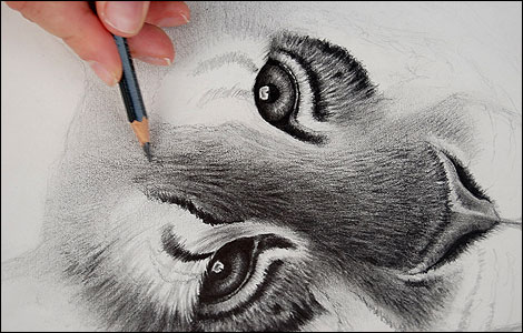 how to draw realistic lion pictures