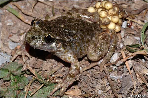 10 anfibios raros en peligro de extinción