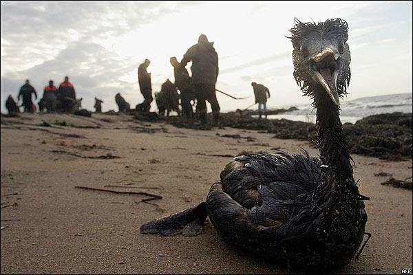 Pájaro contaminado en el Mar Negro