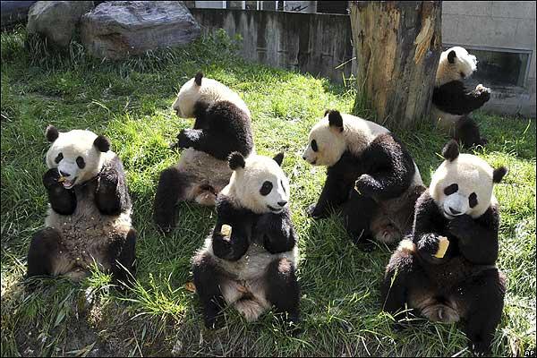 OSOS Panda..... 5172132_panda