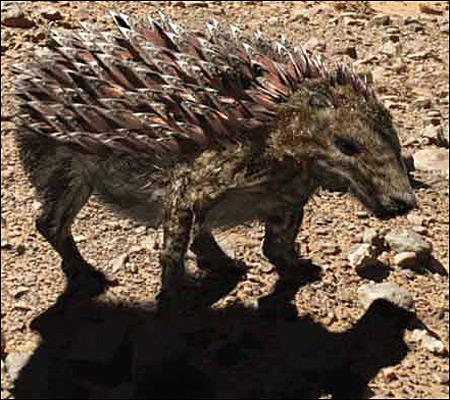 Imagenes de animales con escamas - Imagui
