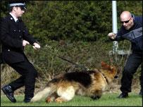 Dog Training West Yorkshire