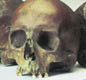 These skulls were found in a small London river. It's possible they are the skulls of people killed when Boudicca's army attacked the Roman city.