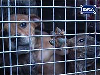 Dogs c/o RSPCA video grab/PA Wire.