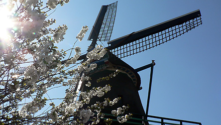 WIndmills at Zaanse Schans in Holland © BBC