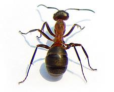bbc gcse bitesize arthropods