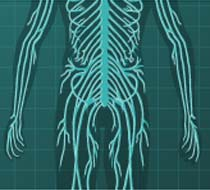 Bbc Science And Nature Human Body