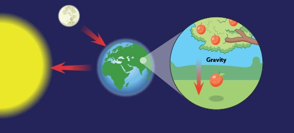 The gravitational pull of the Earth, Sun and Moon