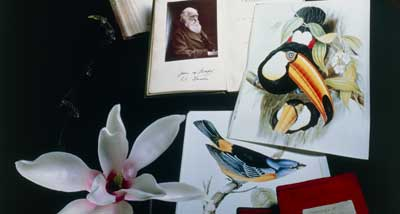 Composite of flower, notebooks and portrait of Darwin