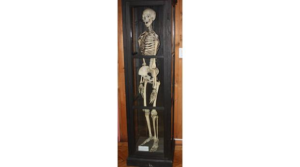 bbc - a history of the world - object : reconstructed human skeleton, Skeleton
