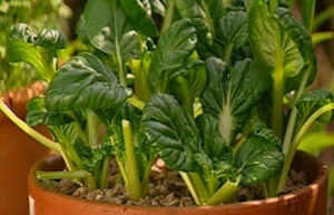 You May Not Have Room For A Vegetable Patch Or Time For An Allotment, But  Many Delicious Varieties Of Salad, Vegetable And Fruit Will Thrive In  Containers ...
