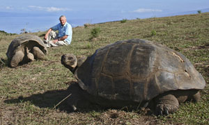 A Life In Cold Blood:  Sir David Attenborough and a pair of Galapagos giant tortoises (geochelone elephantopus)