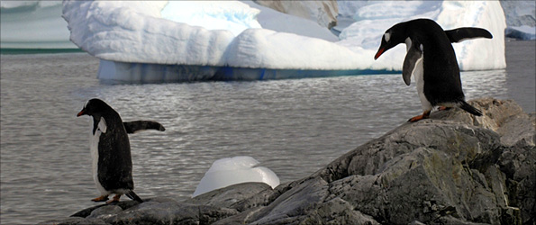 Penguins on the Antarctic coast