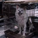 Large dog in a small crate