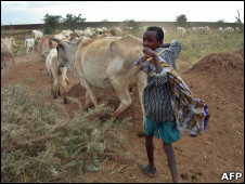 A boy takes care of a herd of cattle near Degahabur in the Ogaden region in Ethiopia