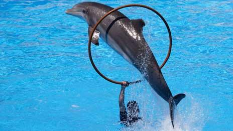 newborn bottlenose dolphin