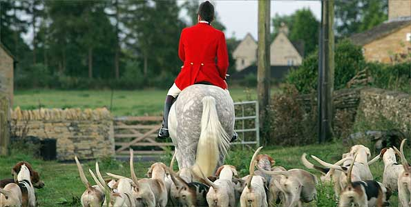 Rider with hounds