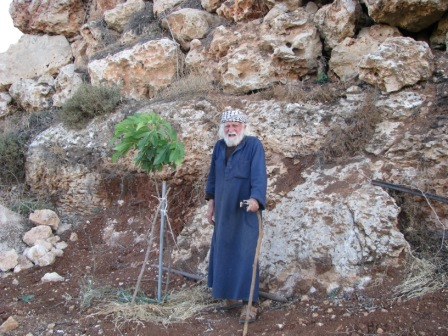 My grandfather who ages more than 95 years is standing beside a small fig tree planted by himself