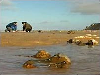Hunting for fossils on the Norfolk coast