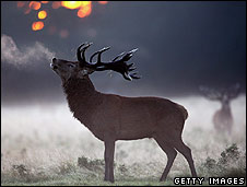 deer_getty226.jpg
