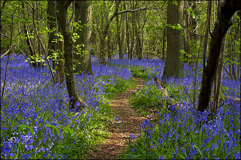 Hagbourne Copse - Phil Jefferies