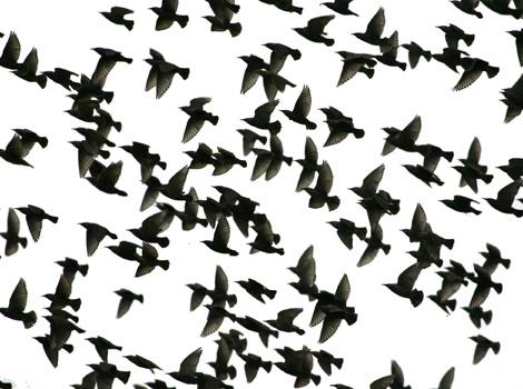 скачать игру Flock - фото 7
