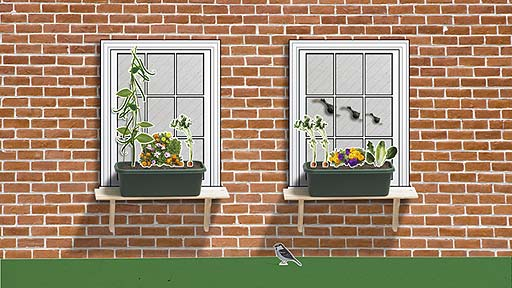 A windowbox with a pretty mixture of veg and flowers