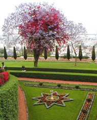 Bahá'í garden with lawns and star-shaped flower beds