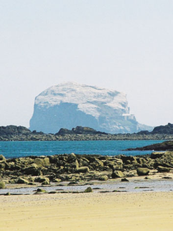 The Bass Rock, courtesy of Margaret Miller