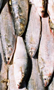 Photo of a fisherman's catch