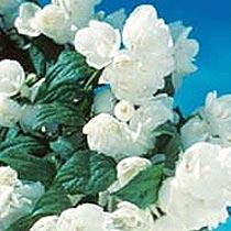 rhs plant finder
