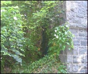 The entrance to the bridge is now overgrown.