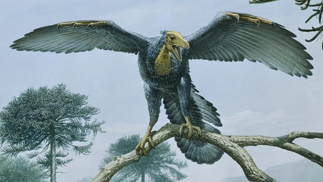 Artist's impression of Archaeopteryx (image: John Sibbick / NHMPL)
