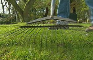 Autumn Lawn Care Raking A Lawn