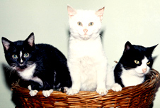 Three cats, BBC image