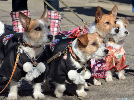 Dogs dressed in clothing