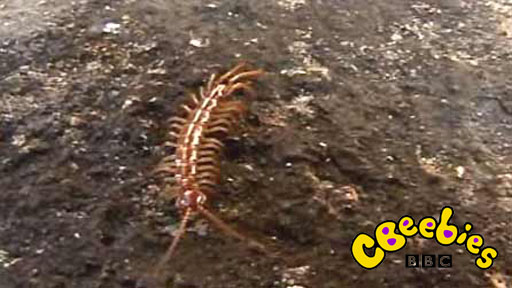 Centipedes and where to find them