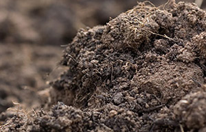 Bbc gardening gardening guides techniques soil testing for Different types of soil and their uses