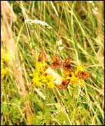 Butterflies at Anglers Country Park