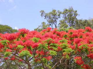 Flame trees; these were in bloom all over the areas we visited, and were absolutely stunning.