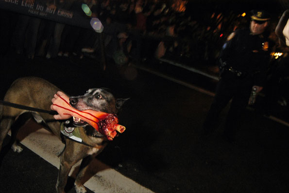A dog with a fake forearm in its mouth on Halloween night in New York City