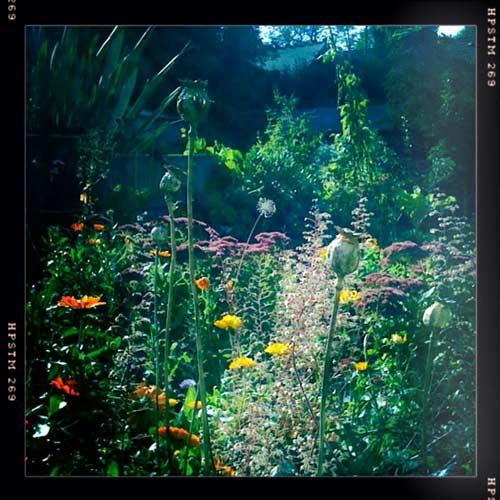 Garden tidy | The Enduring Gardener